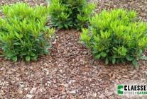 Tuinproducten 4